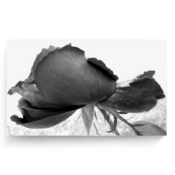 Photo Canvas 3:2 s potiskem Black Rose