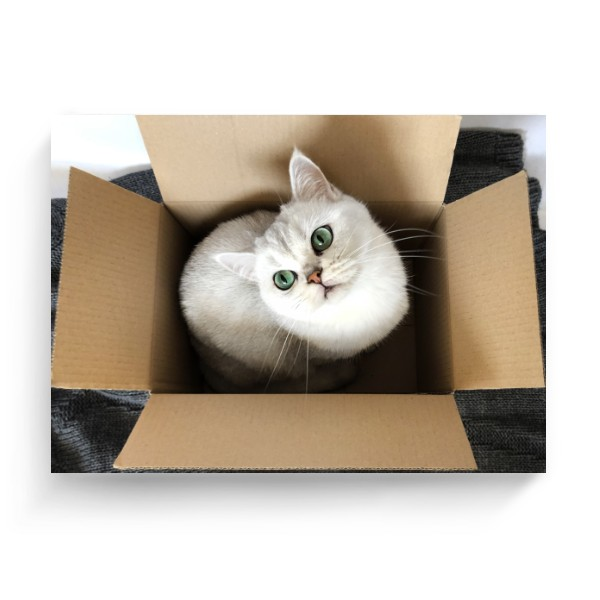 Photo Canvas 4:3 s potiskem Cat in the box
