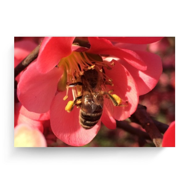 Photo Canvas 4:3 s potiskem Bee at work